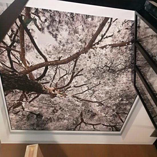 Plafond tendu arbre neige hiver